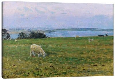 Sheep Grazing, Osterby, Skagen  Canvas Art Print