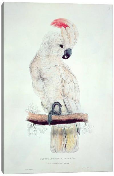 Salmon-Crested Cockatoo  Canvas Art Print