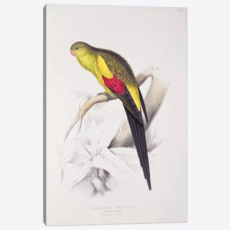 Black-Tailed Parakeet  Canvas Print #BMN753} by Edward Lear Canvas Artwork