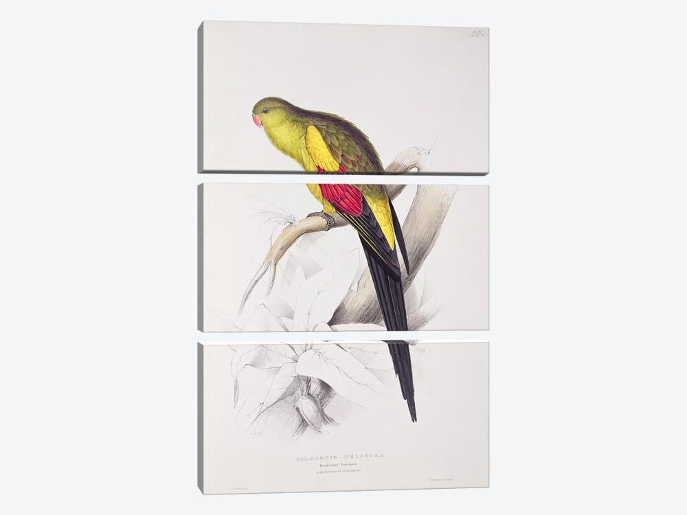 Black-Tailed Parakeet  by Edward Lear 3-piece Canvas Art