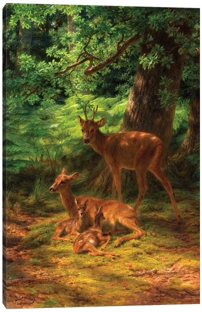 Deer In Repose, 1867 Canvas Art Print