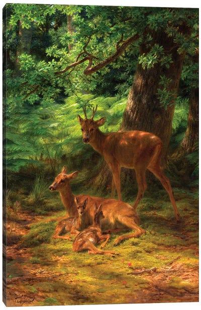 Deer In Repose, 1867 Canvas Art Print