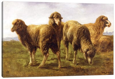 Sheep Grazing In A Meadow Canvas Art Print