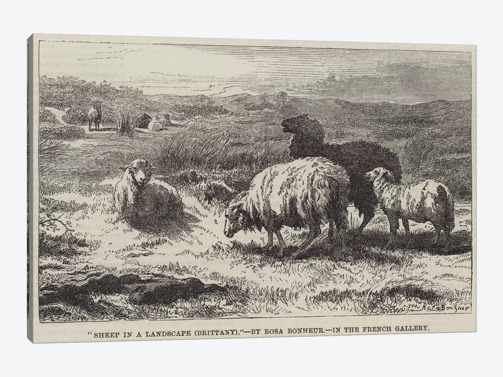 Sheep In A Landscape, Brittany (Illustration For The Illustrated London News), 23 April 1859 by Rosa Bonheur 1-piece Canvas Art Print