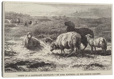 Sheep In A Landscape, Brittany (Illustration For The Illustrated London News), 23 April 1859 Canvas Art Print