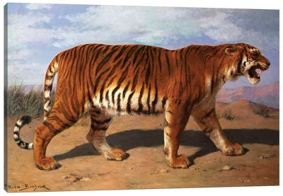 Stalking Tiger Canvas Art Print