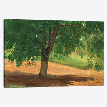 Study Of Light And Shade Canvas Print #BMN7556} by Rosa Bonheur Canvas Art Print