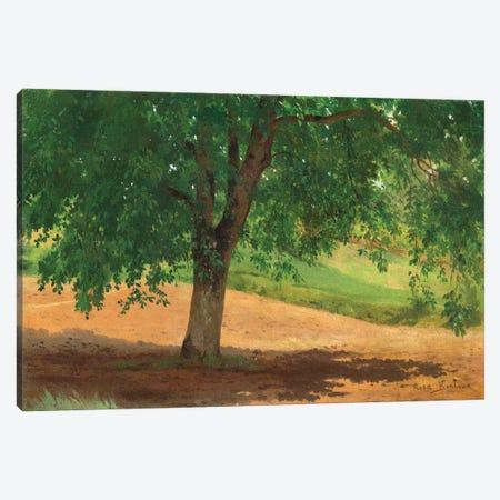 Study Of Light And Shade Canvas Print #BMN7556} by Rosa Bonheur Canvas Art Print