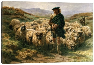 The Highland Shepherd (Watercolour) Canvas Art Print