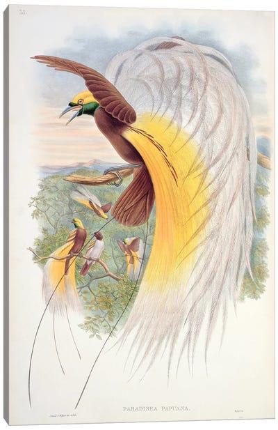 Bird of Paradise, from 'Birds of New Guinea'  Canvas Art Print