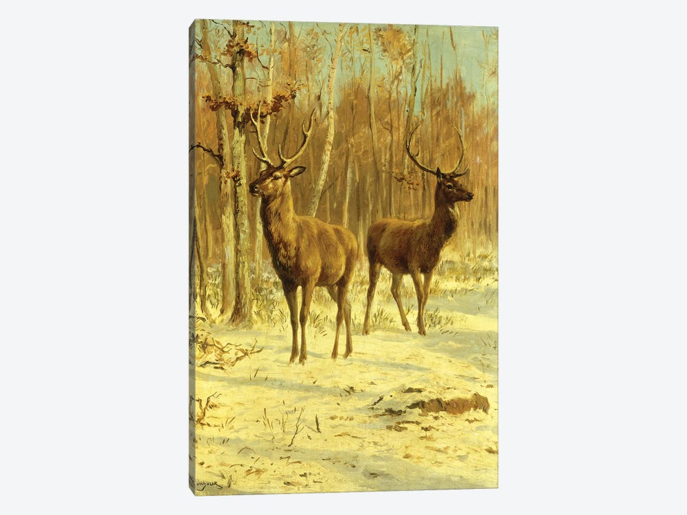 Two Stags In A Clearing In Winter 1-piece Canvas Artwork