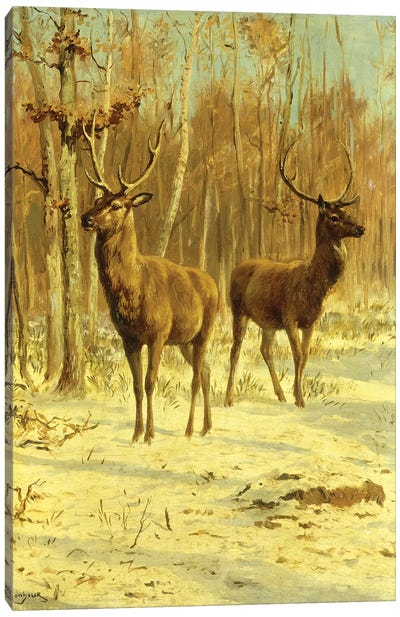 Two Stags In A Clearing In Winter Canvas Art Print