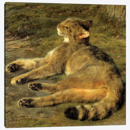 Wild Cat, 1850 Canvas Print #BMN7564} by Rosa Bonheur Canvas Wall Art