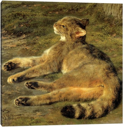 Wild Cat, 1850 Canvas Art Print