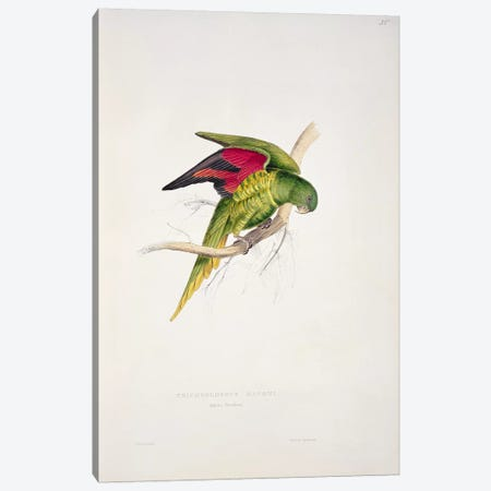 Maton's Parakeet  Canvas Print #BMN756} by Edward Lear Canvas Print