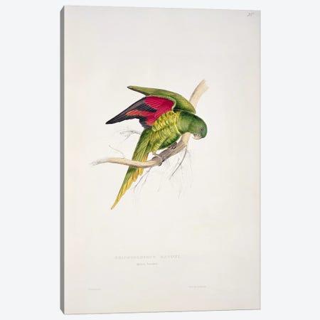 Maton's Parakeet  Canvas Print #BMN756} by Edward Lear Canvas Print