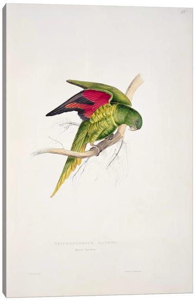 Maton's Parakeet  Canvas Art Print