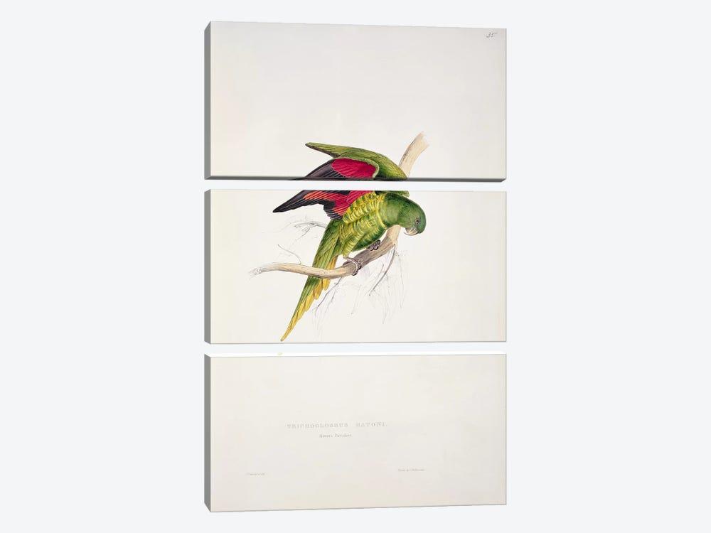 Maton's Parakeet  by Edward Lear 3-piece Canvas Print