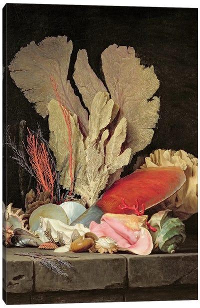 Seaweed, Lithophytes And Seashells Canvas Art Print