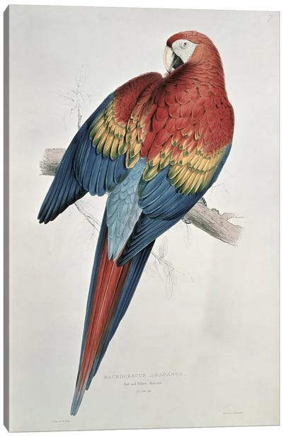 Red and Yellow Macaw  Canvas Art Print
