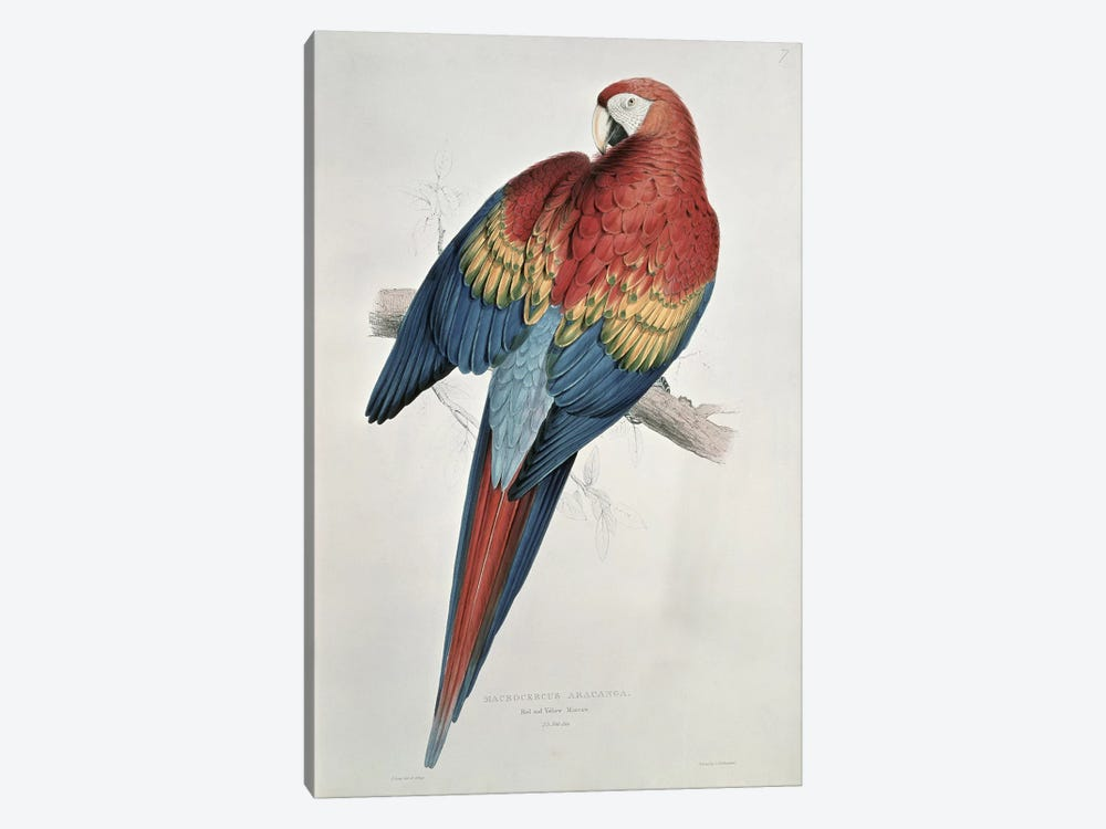 Red and Yellow Macaw  by Edward Lear 1-piece Canvas Art