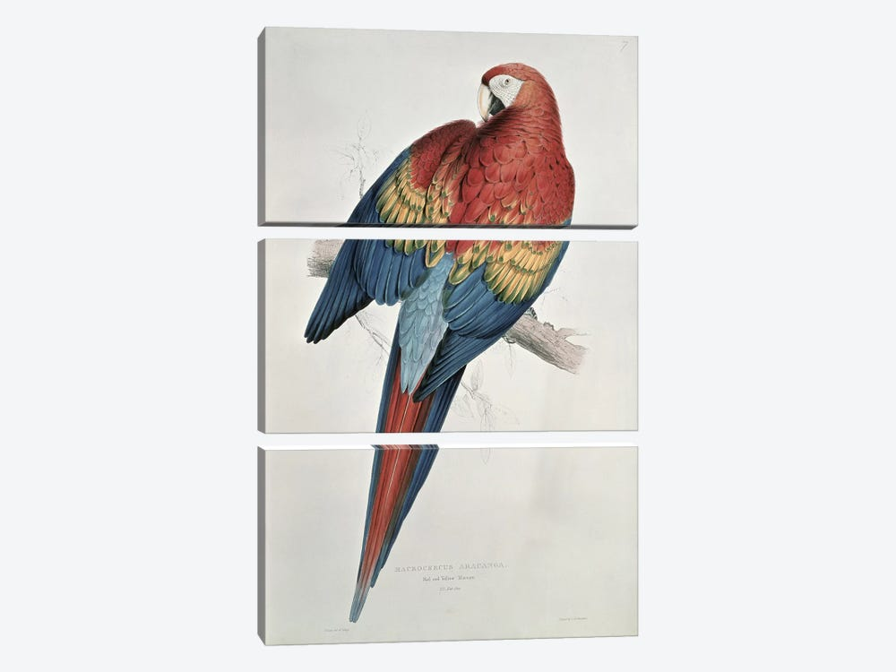 Red and Yellow Macaw  by Edward Lear 3-piece Canvas Artwork