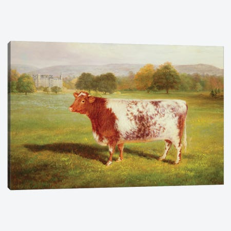 Portrait of a Shorthorn, 19th century Canvas Print #BMN760} by William Joseph Shayer Art Print