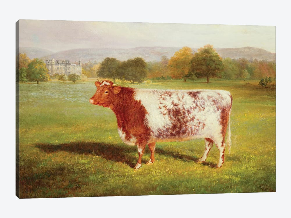 Portrait of a Shorthorn, 19th century by William Joseph Shayer 1-piece Canvas Art