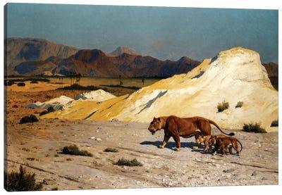 Lioness And Cubs; Lionne et Lioceaux Canvas Art Print