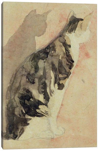 Study Of A Cat I Canvas Art Print