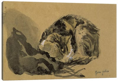 Study Of A Cat II Canvas Art Print