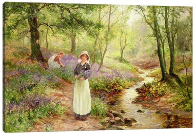 The Bluebell Glade Canvas Art Print