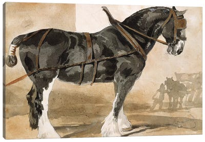 Harnessed black horse Canvas Art Print