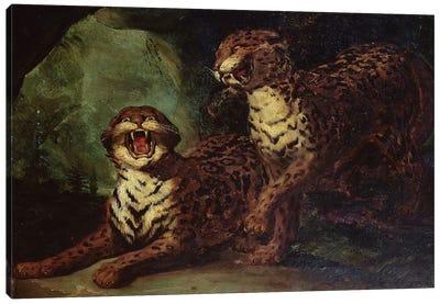 Two Leopards, c. 1820  Canvas Art Print