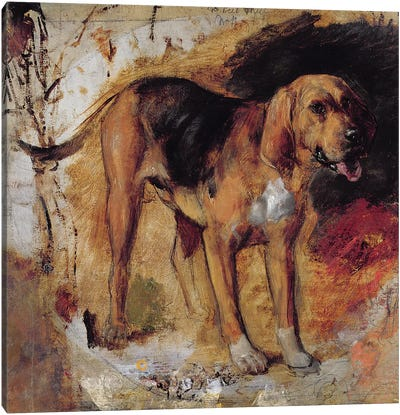 A Study of a Bloodhound, 1848  Canvas Art Print