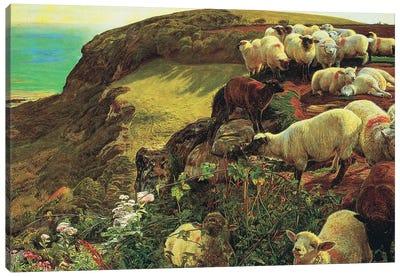 Strayed sheep Canvas Art Print
