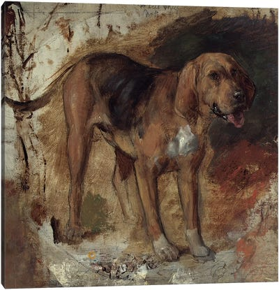 Study of a Bloodhound, 1848 Canvas Art Print