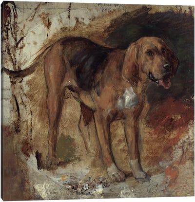 Study of a Bloodhound, 1848 Canvas Art Print