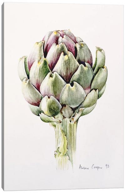 Artichoke Study, 1993  Canvas Art Print