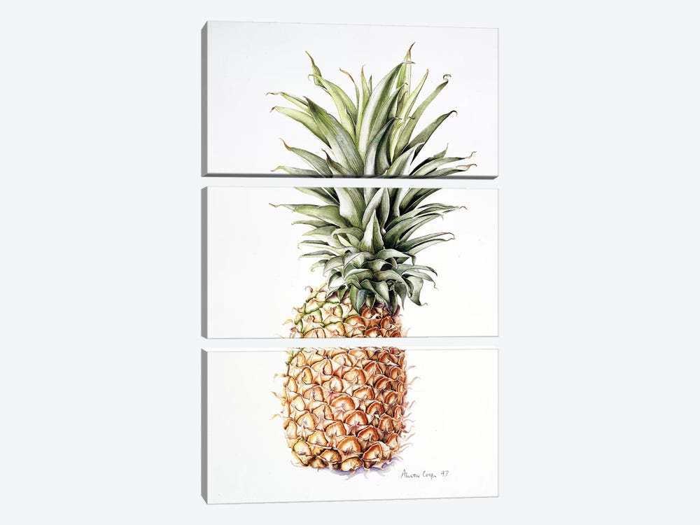 Pineapple, 1997  by Alison Cooper 3-piece Canvas Artwork