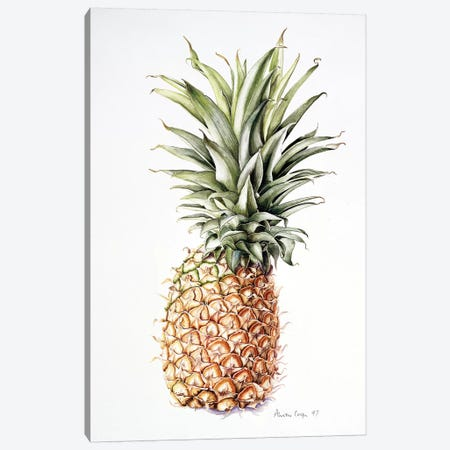 Pineapple, 1997  Canvas Print #BMN8355} by Alison Cooper Canvas Print