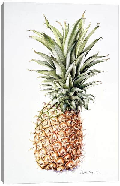 Pineapple, 1997  Canvas Art Print