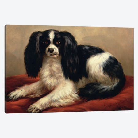 A King Charles Spaniel Seated on a Red Cushion Canvas Print #BMN837} by Eugene Joseph Verboeckhoven Canvas Art