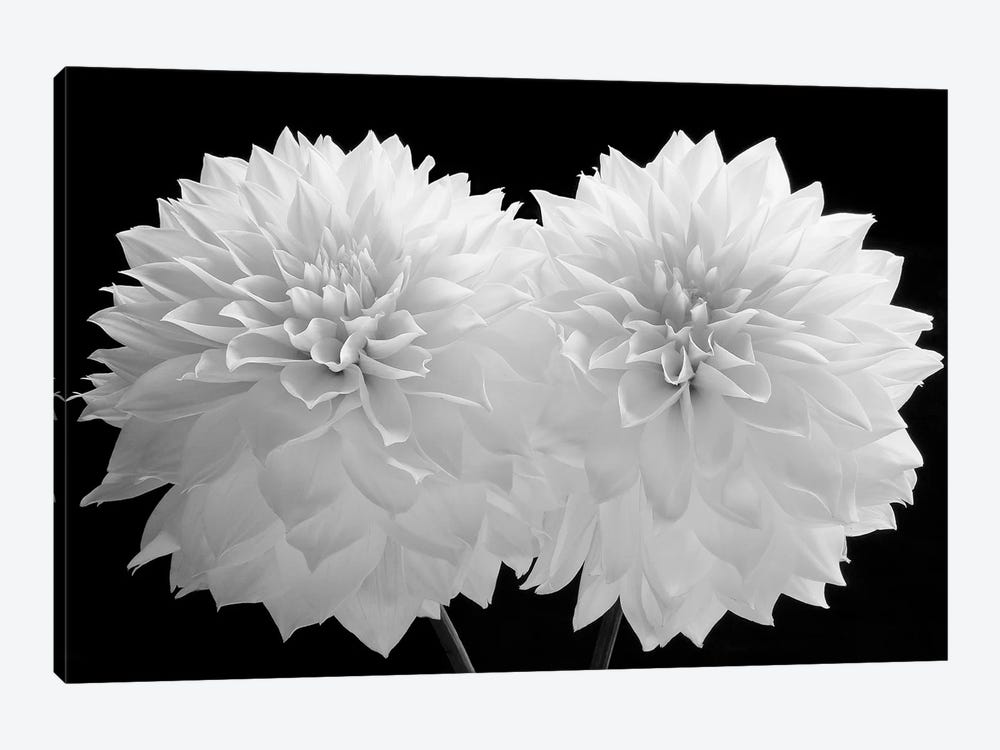 Dahlia Dramaticus, 2008  by Hiroyuki Arakawa 1-piece Art Print