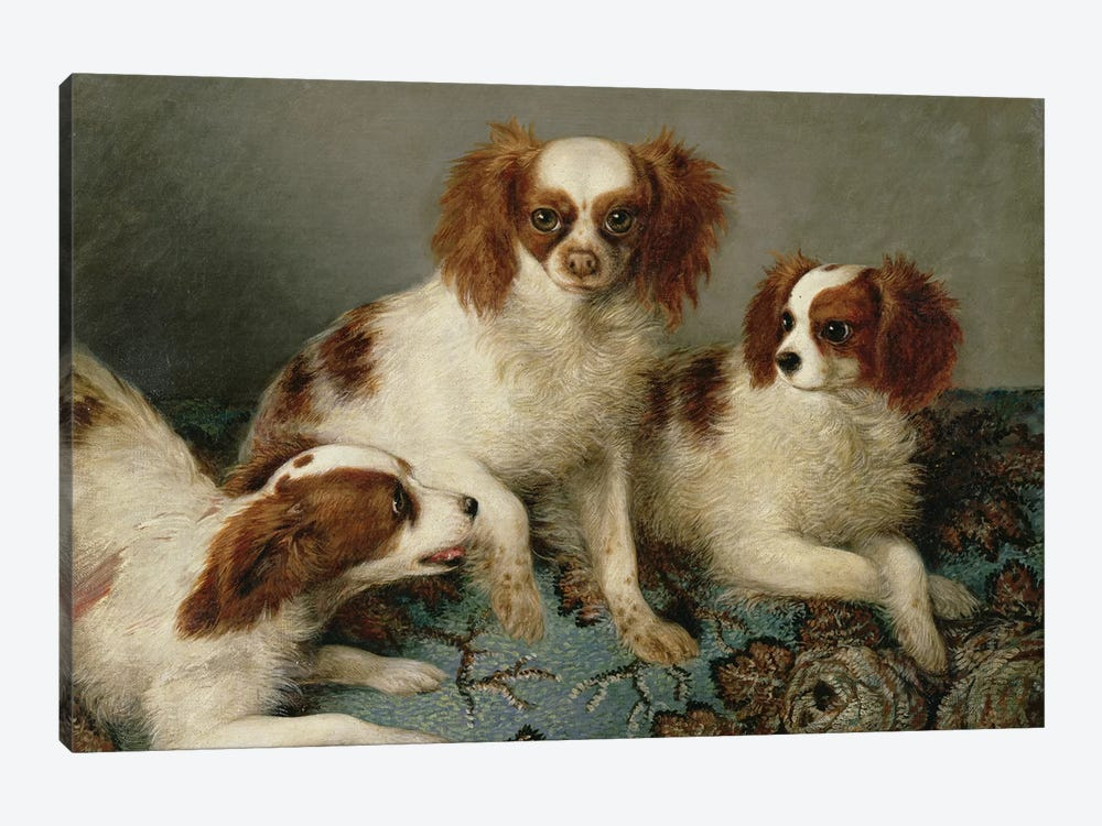 Three Cavalier King Charles Spaniels on a Rug  by English School 1-piece Canvas Print