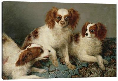 Three Cavalier King Charles Spaniels on a Rug  Canvas Art Print