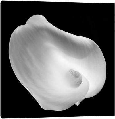 Lily Of Revelation, 2008  Canvas Art Print