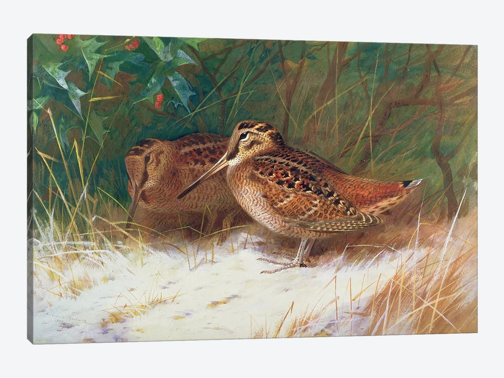 Woodcock in the Undergrowth by Archibald Thorburn 1-piece Canvas Wall Art