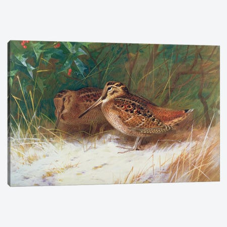 Woodcock in the Undergrowth Canvas Print #BMN842} by Archibald Thorburn Canvas Art