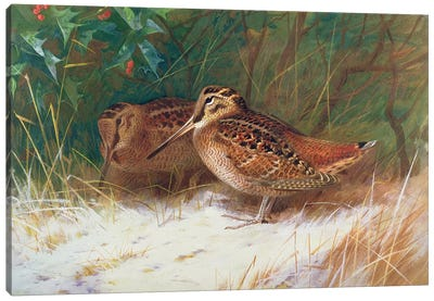 Woodcock in the Undergrowth Canvas Art Print